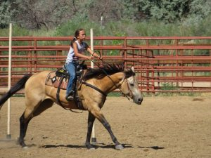 A young rider guides her buckskin through a poles course at a St. Vrain Roundup Club show.