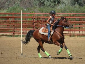 A young female horse and rider compete in a pole class during a St. Vrain Roundup Club show.