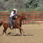 An older male rider completing a poles course at a St. Vrain Roundup Club show at the Boulder County Fairgrounds