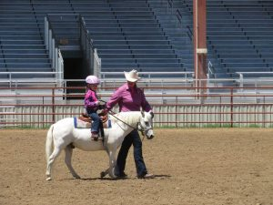 A young rider on a white pony competes in a lead line class at a St. Vrain Roundup Club show